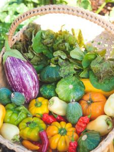 garden-fresh-vegetables-in-basket