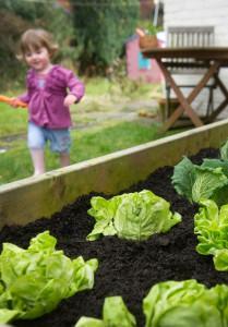 kid-lettuce